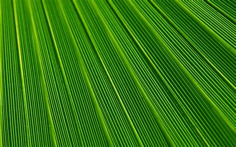nature pattern wall paper vn29 leaf green surface texture nature pattern wallpaper