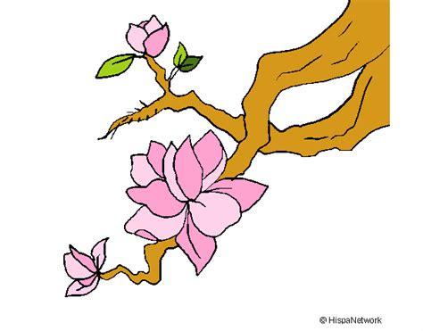 fiore mandorlo disegno fiore di mandorlo colorato da utente non