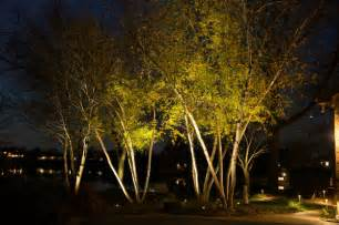 Landscape Up Lighting Uplights On A Grove Of Trees Landscape Lights And Outdoor Lighting