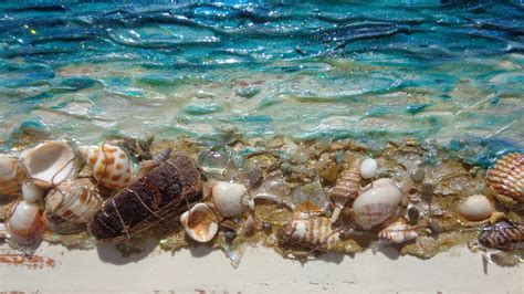 di mare conchiglie di mare su legno vendita quadri