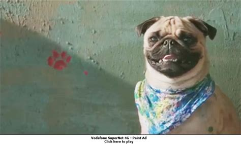 vodafone pug ad vodafone brings back pug to fight the airtel