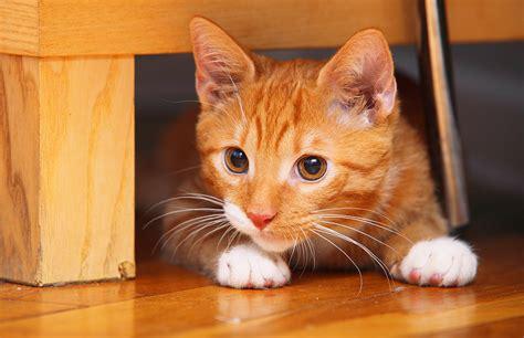 banana kitten named orfey cats 70 cat names hilarious names you ll