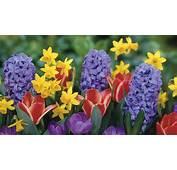 Flori De Primavara Poze 95 Cu