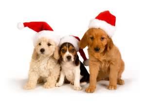 santa puppies puppies in santa hats