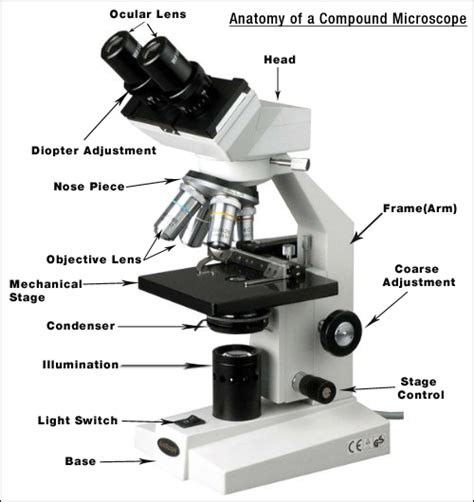 Light Microscope Definition by The Compound Microscope Matthiaslai