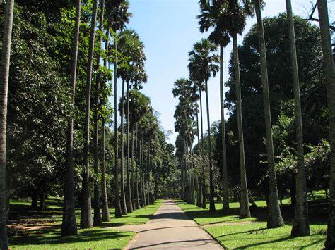 botanical garden peradeniya file botanical garden of peradeniya 05 jpg wikimedia commons