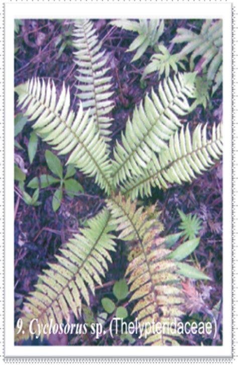 mengenal jenis tumbuhan paku pakuan   manfaatkan