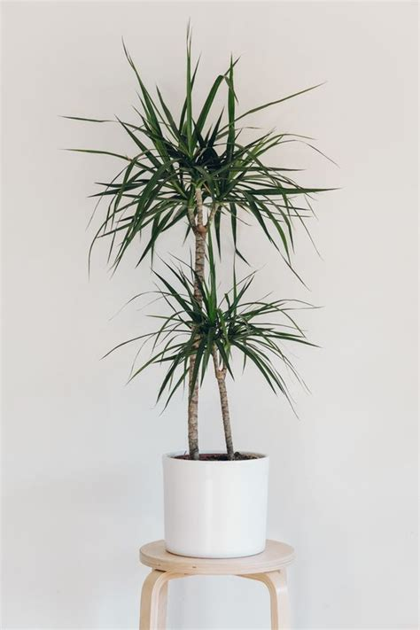 interior plants best 20 low light houseplants ideas on pinterest indoor