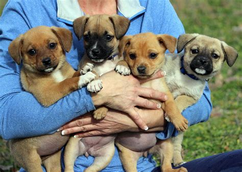 images of puppies home rmpuppyrescue org