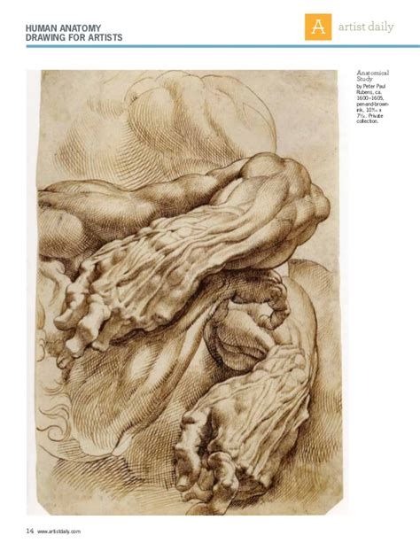 And Anatomy Drawing drawing anatomy