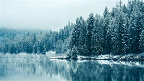 columbia canada winter snow and trees chrome refillable lighter 15621702 cdg frozen pine forest cool wallpapers