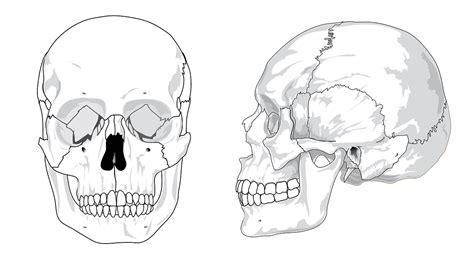 mandibula tulang rahang  menghilangkan jerawat