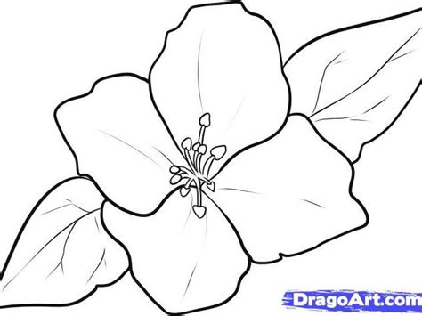 imagenes japonesas para dibujar c 243 mo dibujar un jazm 237 n hazlo tu mismo taringa