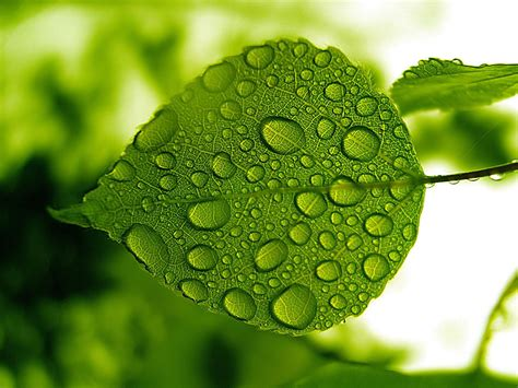 wallpaper green love water drops on leaf wallpapers