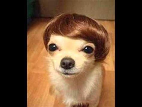 imagenes de animales chistosos perros chistosos 2013 youtube