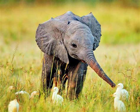 google images elephant elephant jodi l milner author