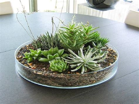 Ideas For Indoor Succulents Design Great Dining Room Colors Succulent Plant Ideas For Centerpieces Container Garden Ideas With