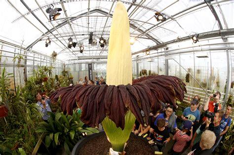 Largest Botanical Garden In The World World S Flower Titan Arum Amazing Planet News