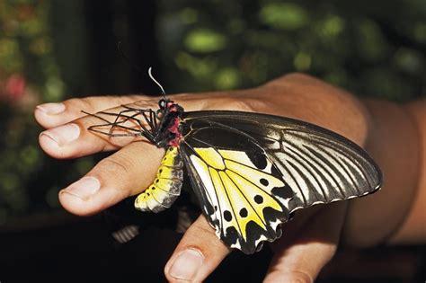 Mukena Bali Butterfly 2 butterfly park now bali