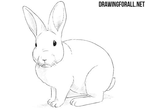 How To Draw A Drawingforall by How To Draw A Rabbit Drawingforall Net