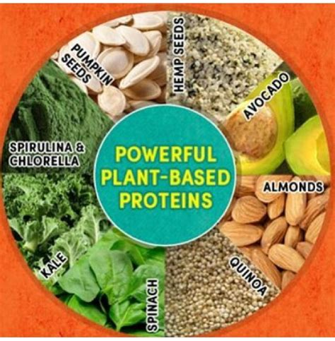 r proteins plants plant based proteins health is wealth