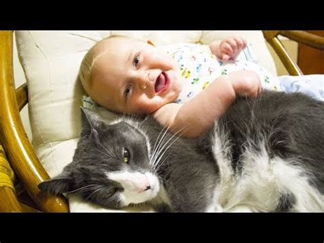 cute cats  dogs love babies compilation  youtube