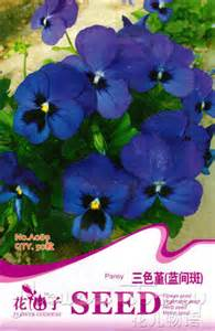 pansy seed  pansy seeds beautiful bright blue flowers