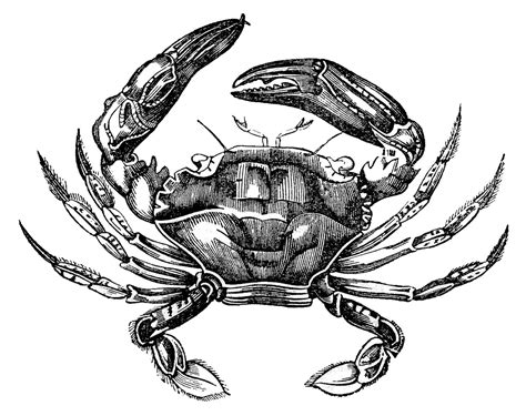 printable retro art vintage clip art 3 fine crabs and seahorse printable