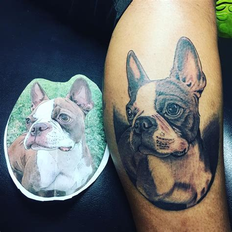 boston terrier tattoo boston terrier tattoos 20 pictures