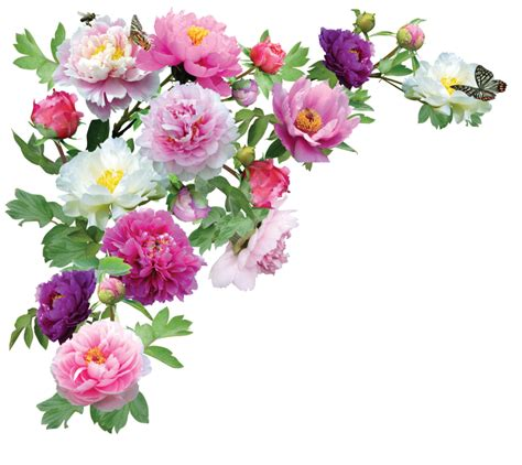 Image Of Garden Flowers Flower Png Transparent Flower Png Images Pluspng