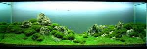 aquascaping styles aquascapers