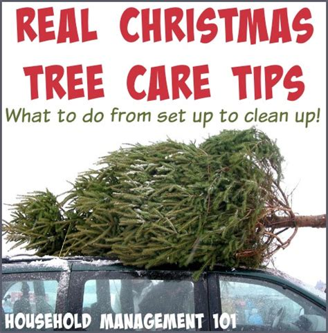 28 best real christmas tree care christmas tree
