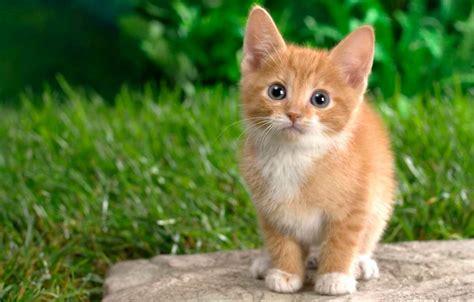 imagenes goticas de gatos nombres de gatos