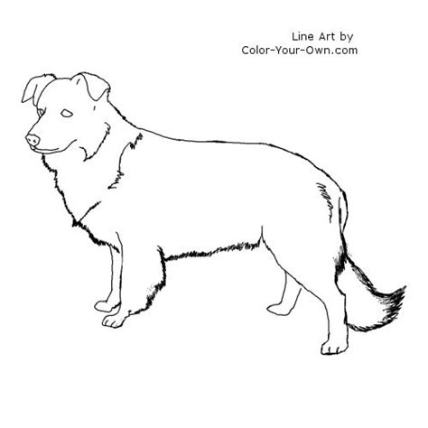 Free Coloring Pages Of Border Border Collie Coloring Pages
