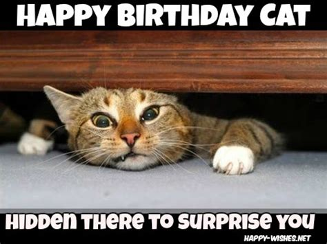 Cat Happy Birthday Meme - happy birthday wishes for cats quotes images memes