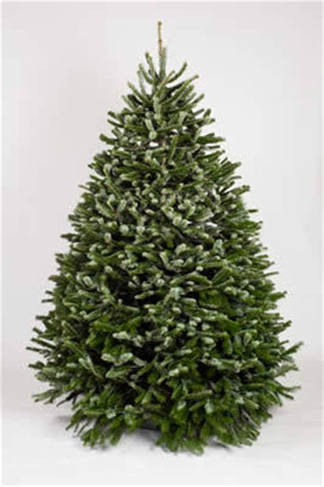 fresh cut christmas trees los angeles san fernando valley