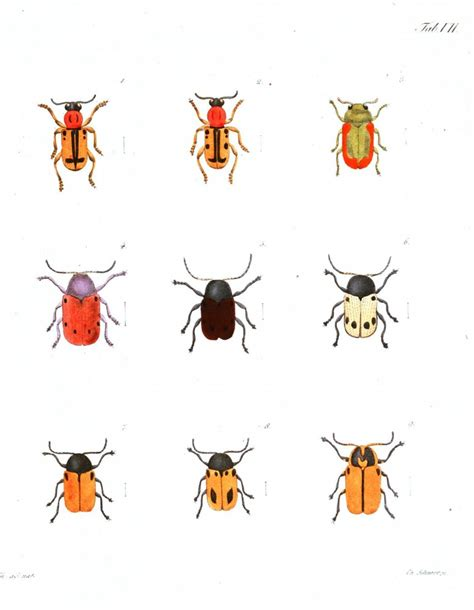 printable pictures insects animal insect ladybugs bees etc vintage printable