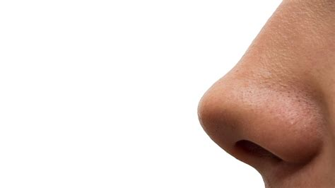 has nose do not pluck your nose hairs unless you a wish onedio co