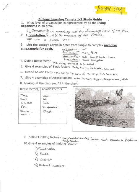 Worksheet Site by 100 Luizah Worksheet And Essay Site Endearing Excel