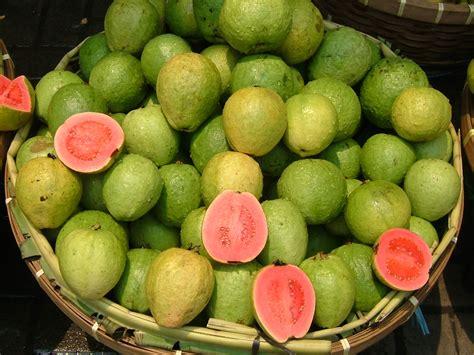 Curry Leaf Plant Diseases - guava id jpg