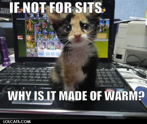 Cat Laptop Meme - lolcats if not for sits why is it made of warm