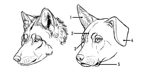 how to dogs how to draw a details make the difference