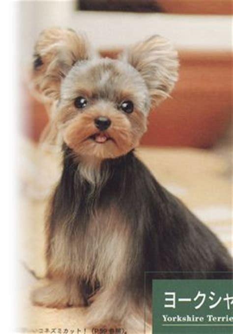 japanese style grooming yorkie japanese grooming or stuffed animal dogs puppys style and