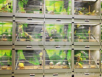 bird cages in pet shop