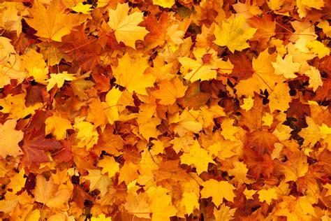 autumn leaves background wallpapersafari