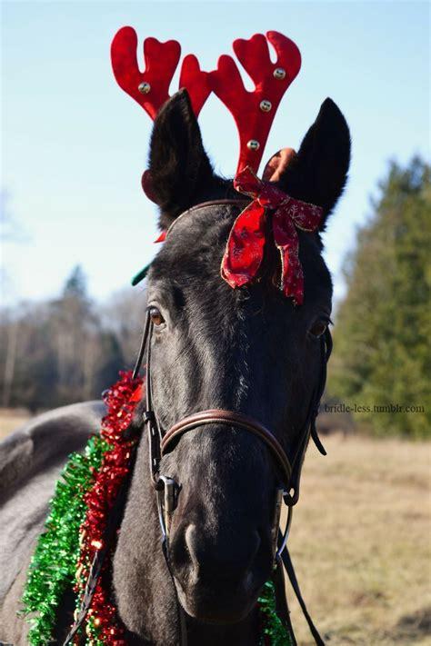 merry christmas horse horse love christmas horses horses