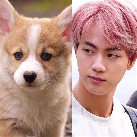 bts dogs bts as dogs army s amino