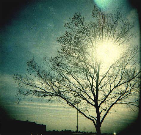holga photography holga peace photography sun tree image 210209 on