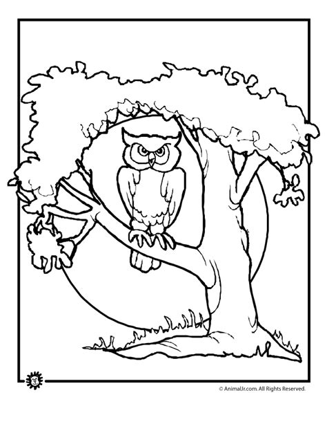 free printable halloween owl coloring pages free owl preschool coloring pages coloring home