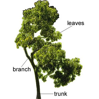 define tree trunk meaning of trunk in longman dictionary of